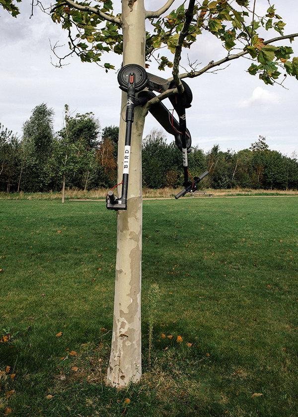 Roller im Baum