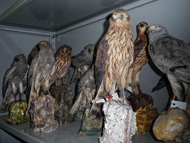 Vielen Jägern geht es einfach nur darum, eine Trophäe zu sammeln   (Foto: Komitee gegen den Vogelmord)