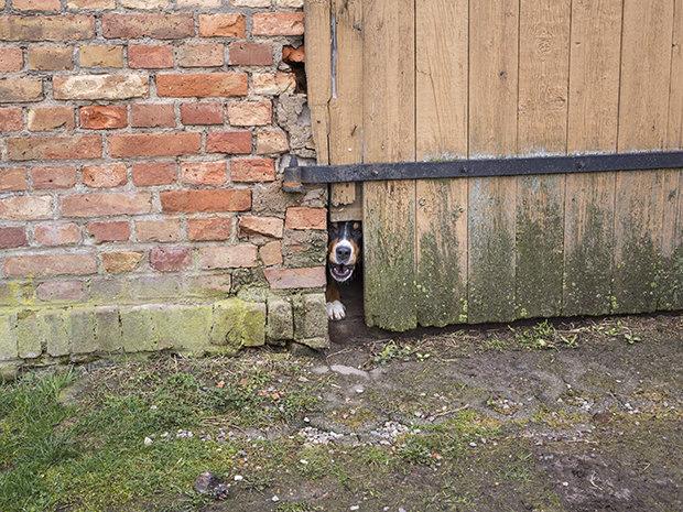 Vom Leben auf dem Land gibt es viele verklärende Bilder. In der Realität muss man aufpassen wie ein Schießhund, dass man gut wirtschaftet und am Ende das Geld stimmt (Foto: Heinrich Holtgreve / OSTKREUZ)