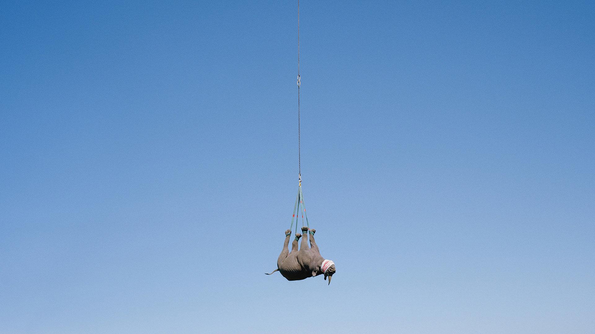 Nashorn (Foto: David Chancellor)