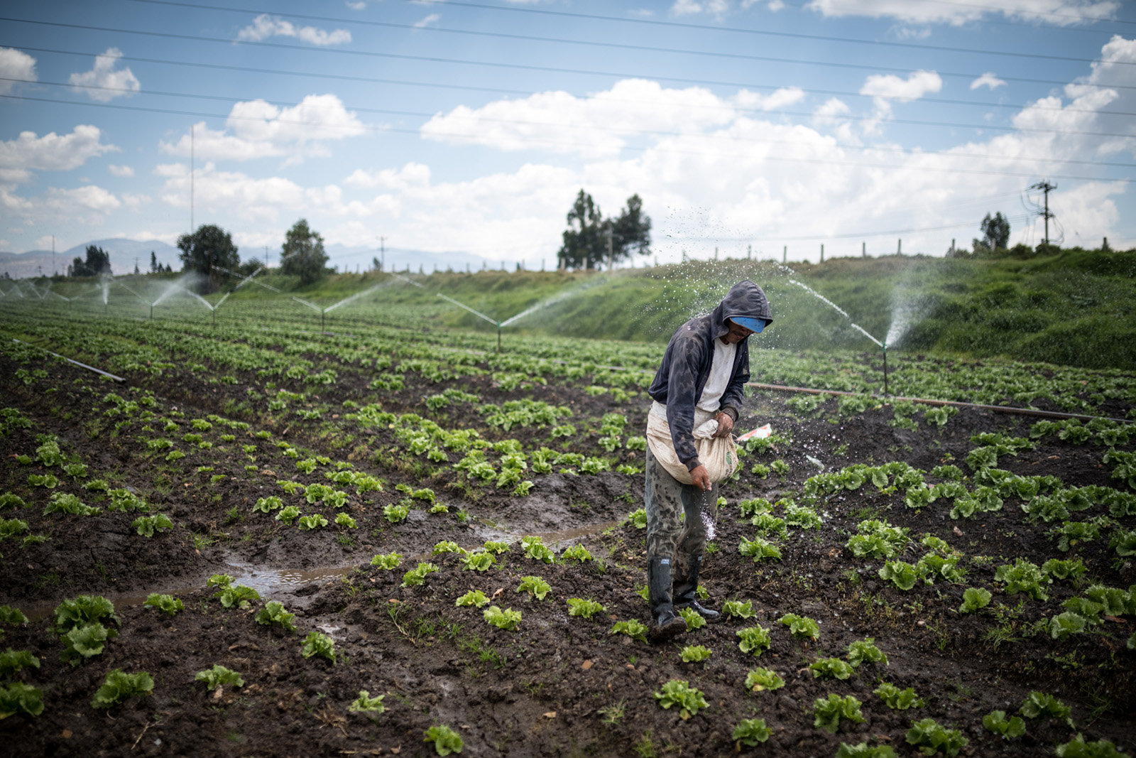 Arbeiter in La Ramada