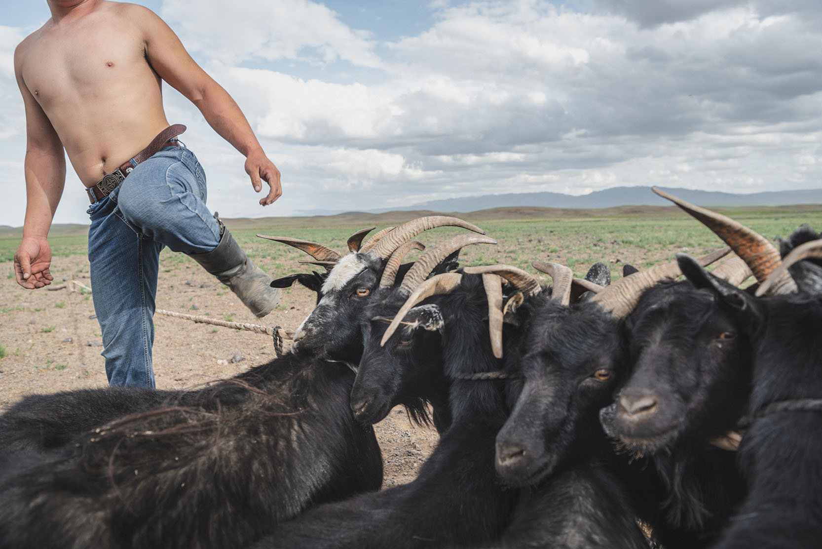 Mongolei, Ger districts, Klimawandel, Ulan Bator, Gobi, Herde