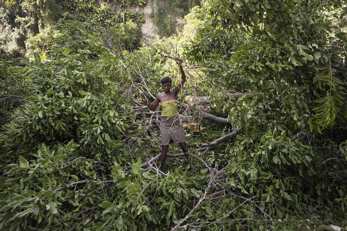 Mann fällt Äste vom Baum für Holzkohle