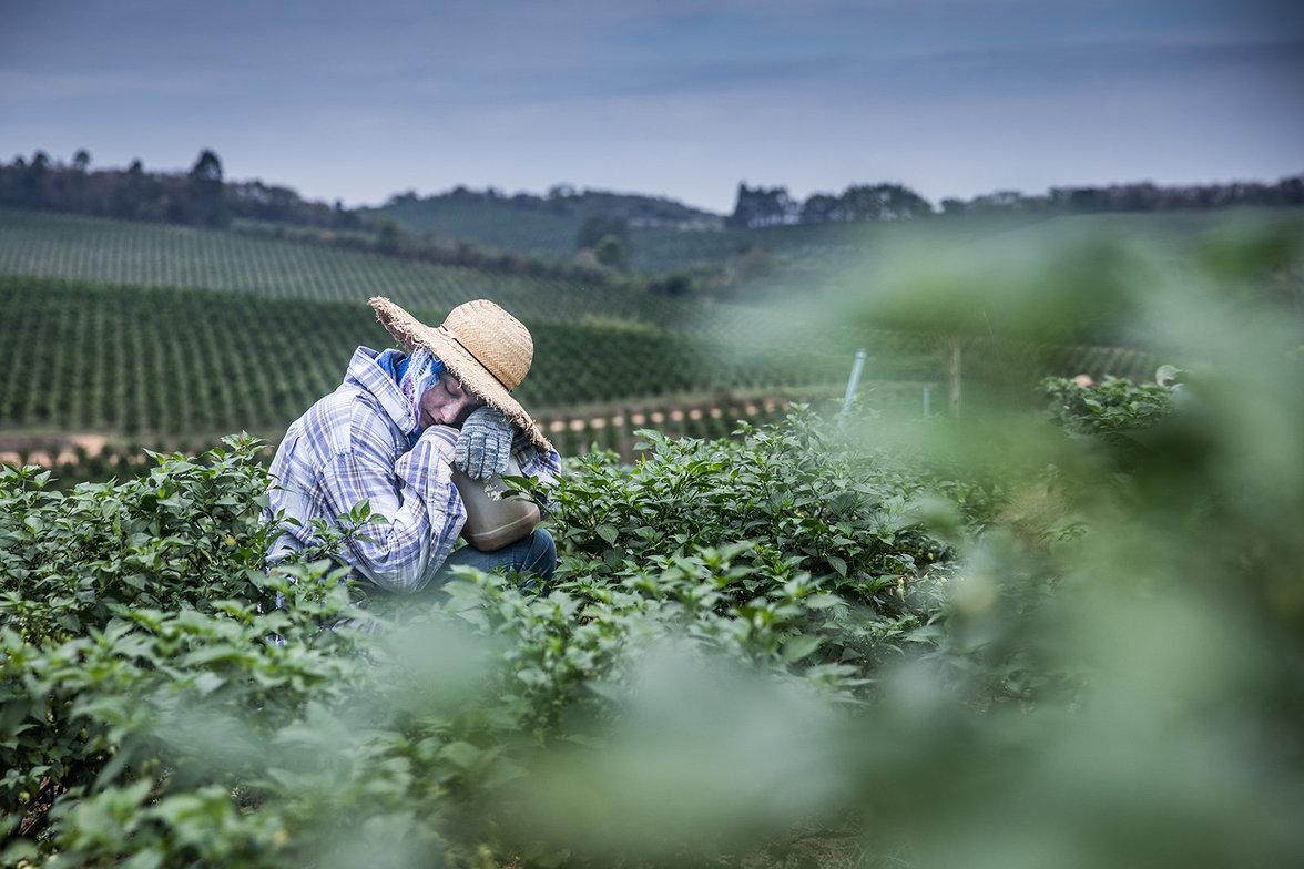Eine Arbeiterin auf dem Chillifeld