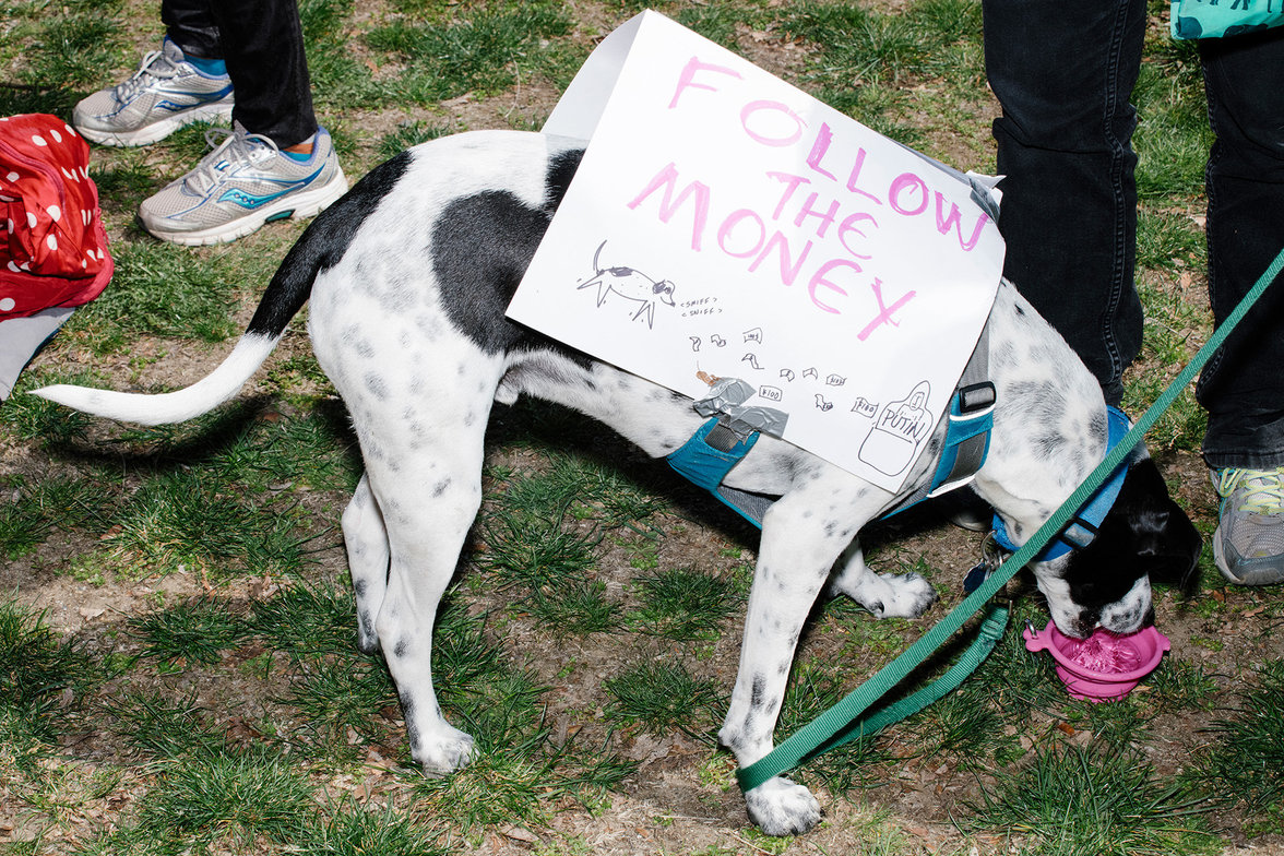 "Hund mit ""Follow the Money"" Transparent  (Foto: M. Scott Brauer)"