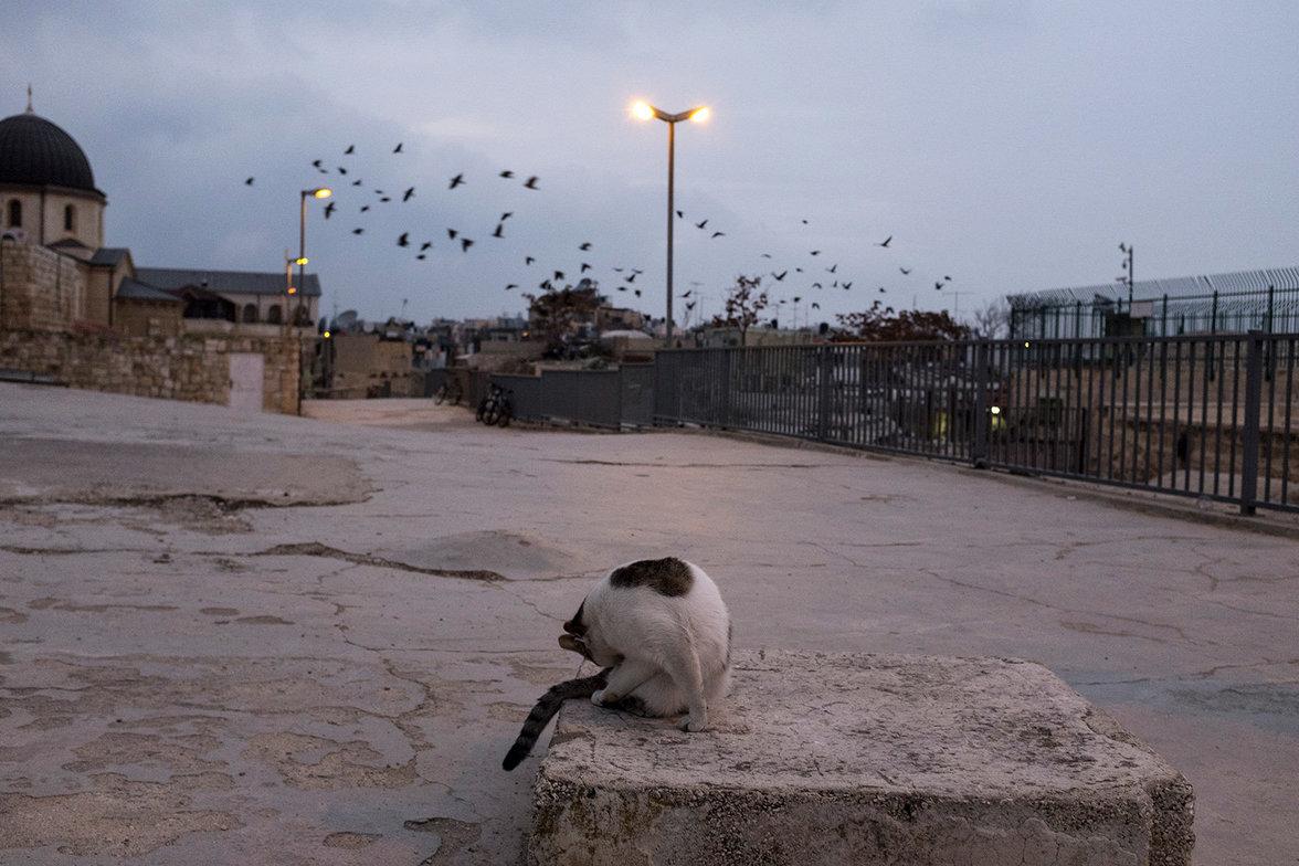Eine streunende Katze putzt sich auf einem Dach.