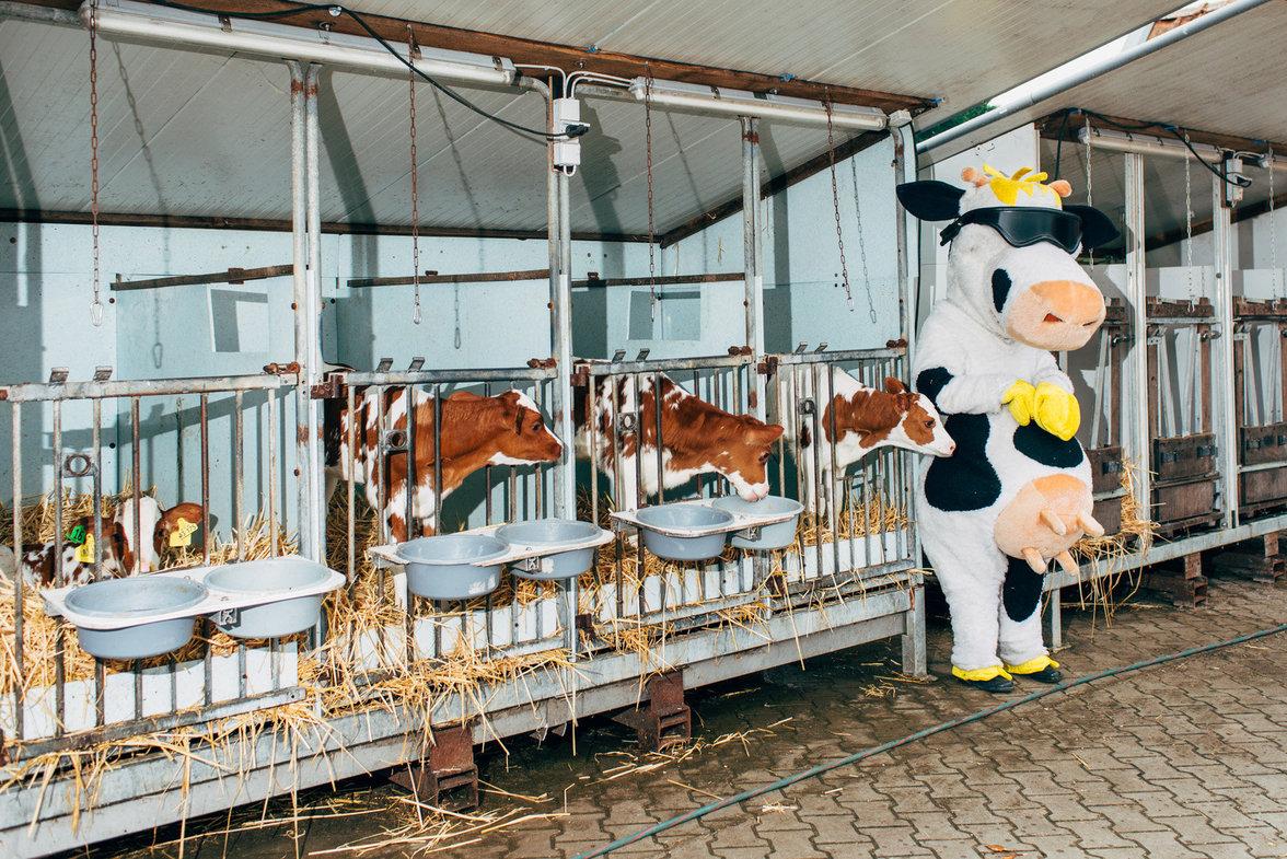 Kälber von Milchkühen werden meist gleich nach der Geburt von ihrer Mutter getrennt. Diese hier auf einem Biobauernhof in der Nähe von Münster haben immerhin ein Maskottchen zum Kuscheln