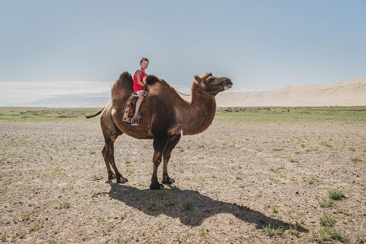 Mongolei, Ger districts, Klimawandel, Ulan Bator; Kamel