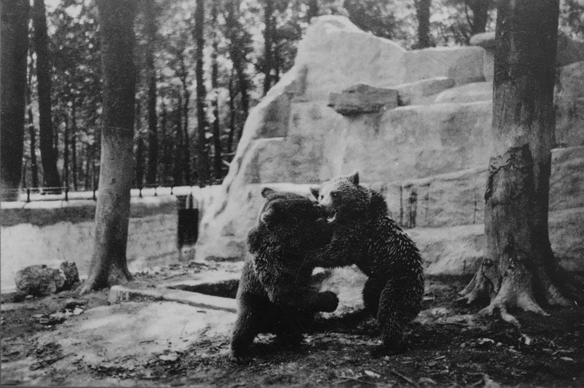 Zoo im KZ Buchenwald (Foto: Gedenkstätte Buchenwald)