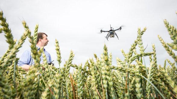 Bauer mit Drohne über Weizenfeld