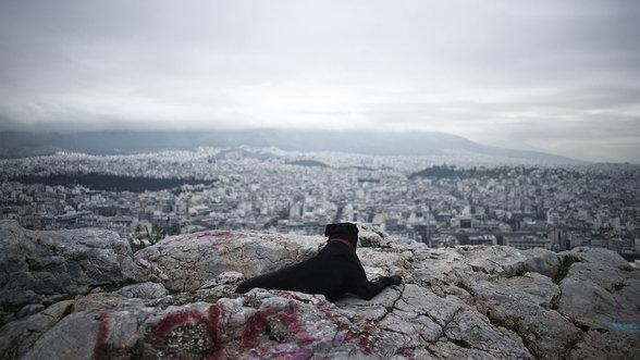 Ein Hund blickt über Athen