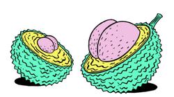 Stinkfrucht-Illustration mit Po