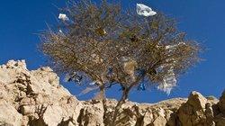 Blühende Landschaften sehen anders aus: In vielen Entwicklungsländern fliegen eine Menge Plastiktüten herum
