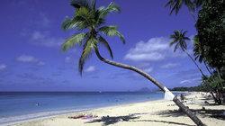Palmenstrand und blauer Himmel