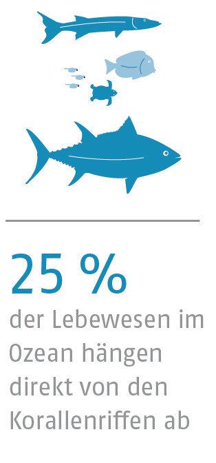 25% der Lebewesen im Ozean hängen direkt von den Korallenriffen ab