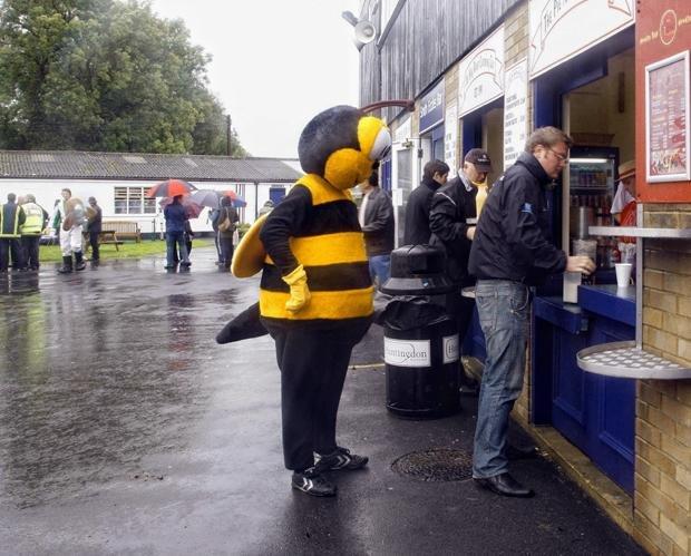 Im Grunde nicht überraschend: Bienen beherrschen Summen bis vier (Foto: Nick Ansell / picture-alliance)
