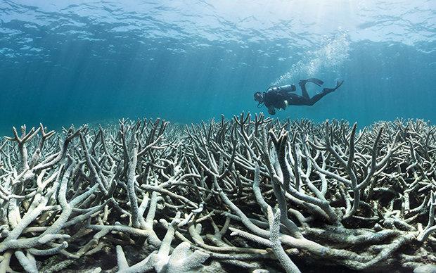 Der Meeresbiologe Tom Goreau will das Korallensterben am