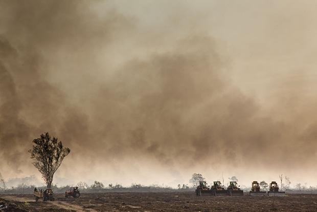 Nach der Brandrodung in einem ehemaligen Waldgebiet im äthiopischen Gambetta ist die Bahn frei für Bulldozer, die den Boden bereiten für den Anbau von Zuckerrohr und Palmöl (Foto: alfredobini\cosmos)