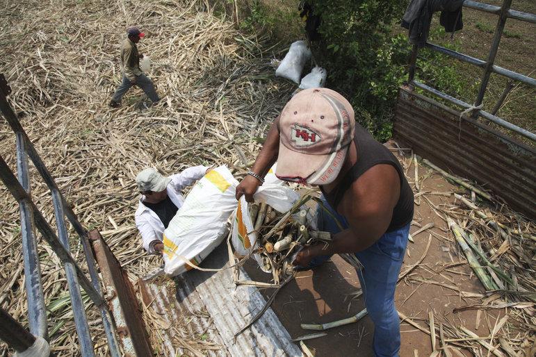Zuckerrohrarbeiter