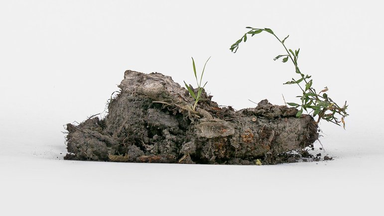 Ein Stück unfruchtbarer Boden