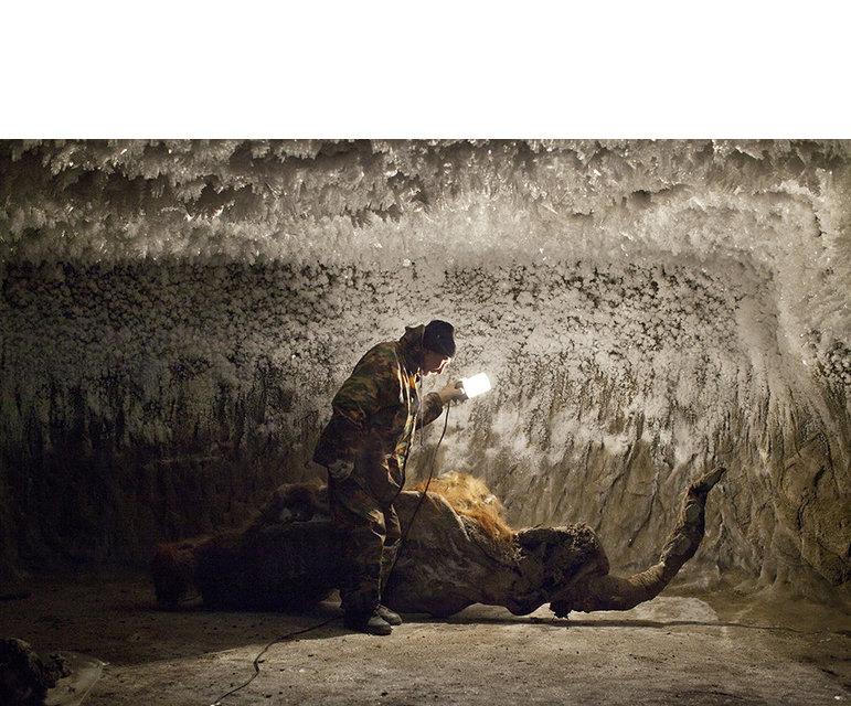 Eisiges Grab- Aus gut erhaltenen Überresten wie diesen wollen russische und südkoreanische Wissenschaftler ein Mammut klonen
