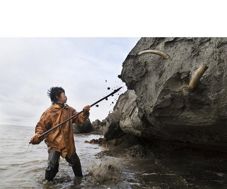 Es taut in der russischen Arktis. Zur Freude der Elfenbeinsammler, denn nun lugen die spitzen Mammutstoßzähne aus dem Permafrostboden hervor
