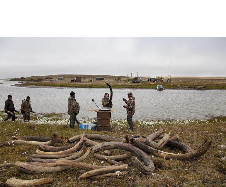 Gute Ausbeute- Die Männer begutachten ihre Funde. Lagern sollte man die Stoßzähne allerdings nicht an der Luft, denn dann werden sie brüchig