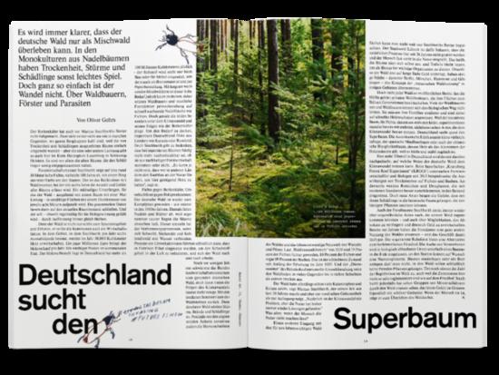 Auswirkungen Klimawandel Wald