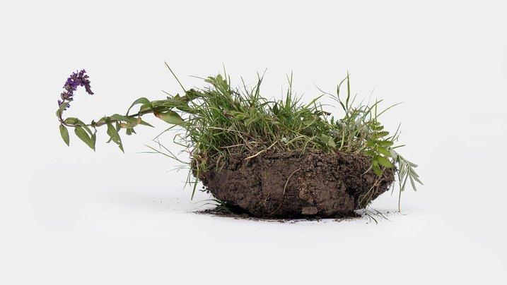 Ein Stück fruchtbarer Ackerboden