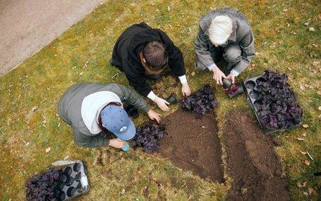 Statt eines weiteren Steins im Zentrum Berlins hat sich der ZAID für etwas andere Orte des Gedenkens entschieden: dreieckige Anpflanzungen des Halbschattengewäches Schwarzer Klee