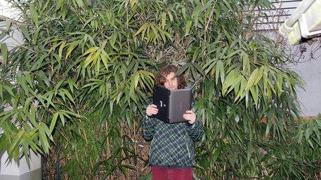 Ein junger Mann steht vor einem Bambusbusch und liest in seinem Laptop